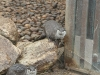 Wednesday: Otters at the New Forest Wildlife Park