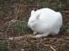 Wednesday: Albino wallaby